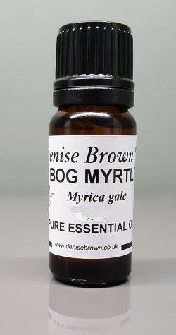 Bog Myrtle (2.5mls) Essential Oil