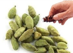Cardamom Seed  (10mls)