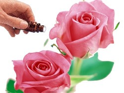 Rose Otto 5% Diluted (10mls) Essential Oil