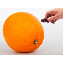 Orange (Sweet) Essential Oil