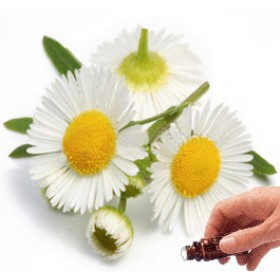 Chamomile (Blue) Essential Oil