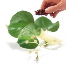 Linden Blossom Absolute   Essential Oil