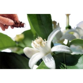 Neroli 5% Diluted (10mls) Essential Oil