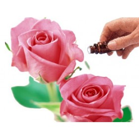 Rose Absolute 5% Diluted (10mls) Essential Oil